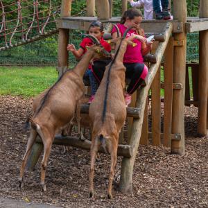 Tierpark Dessau_300x300